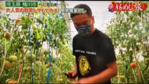 ビニールハウスで男気トマトを収穫している姿