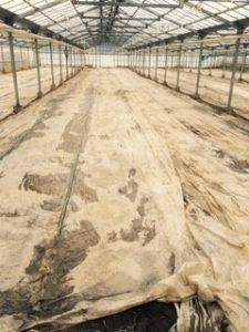 連作障害を予防するための土壌還元消毒