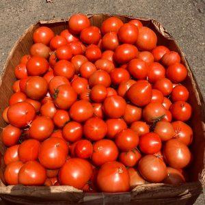 樹で赤くなるのを待って収穫された男気トマト