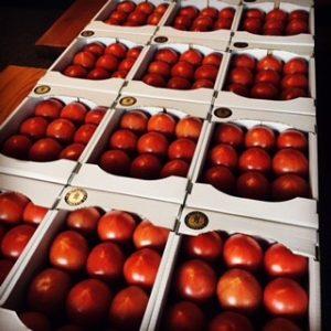 収穫後に綺麗に箱詰めされた男気トマト