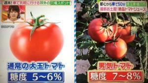 男気トマトが通常のトマトよりも糖度が高いと紹介